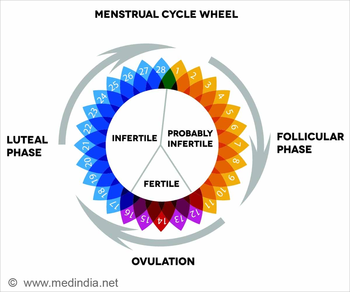 Menstrual Cycle Diagram In Hindi.Period Menstrual Cycle Calculator