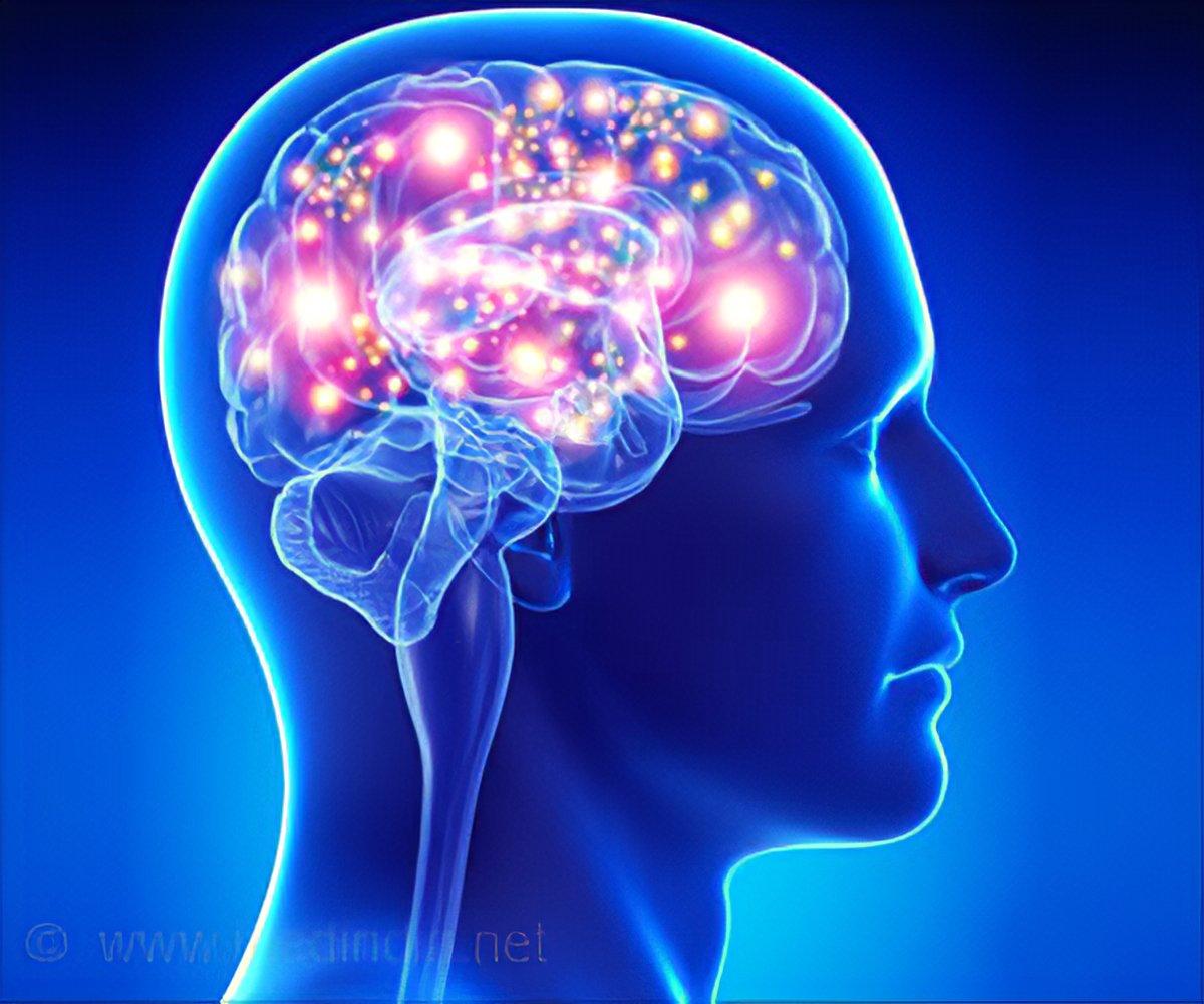 Understanding Brain Mechanisms Of >> Novel Brain Mechanisms Regulating Body Weight Discovered