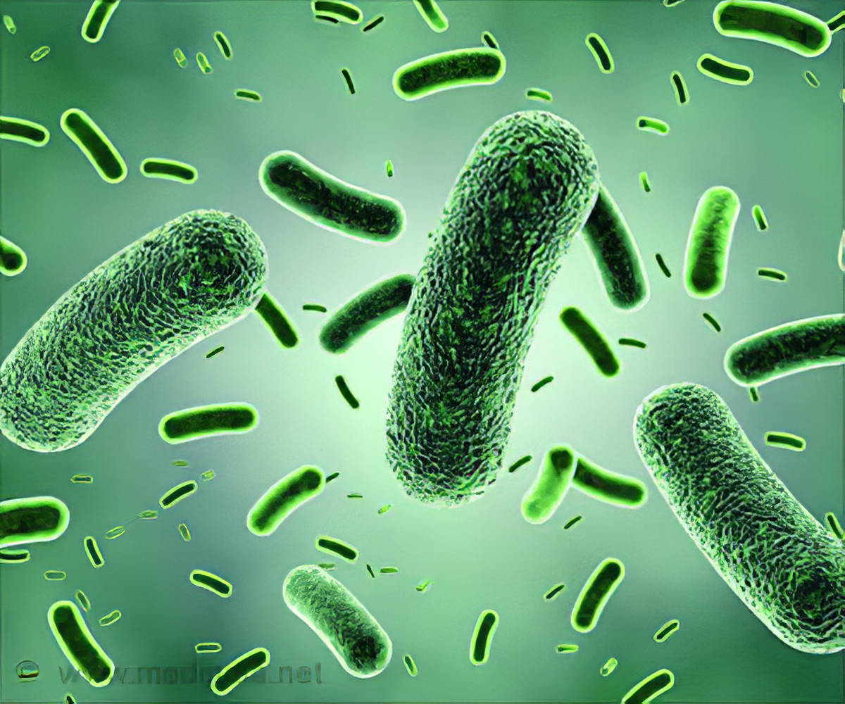Quiz on Bacterial Infections