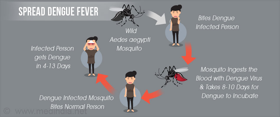 Dengue and Dengue Fever - Symptoms, Causes, Diagnosis