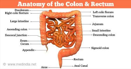 colorectal cancer junction