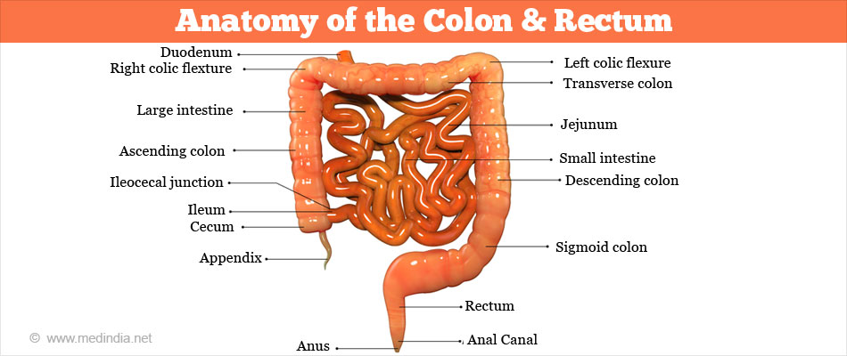 Colorectal Cancer Types Causes Risk Factors Symptoms Diagnosis Treatment Prognosis Prevention